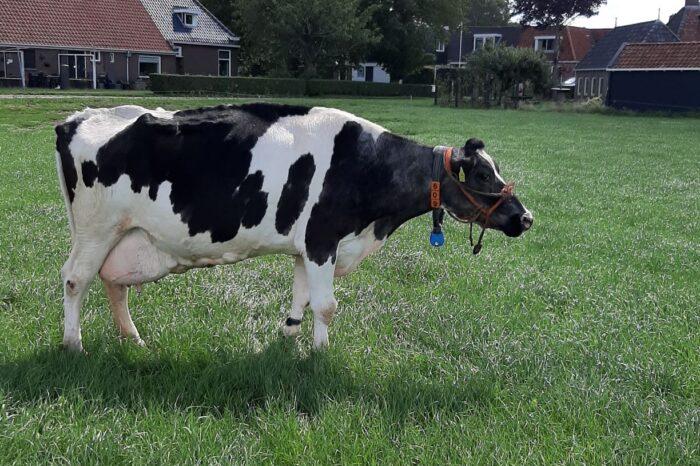 10.000 kg vet & eiwit voor Terdenghe Akke 609